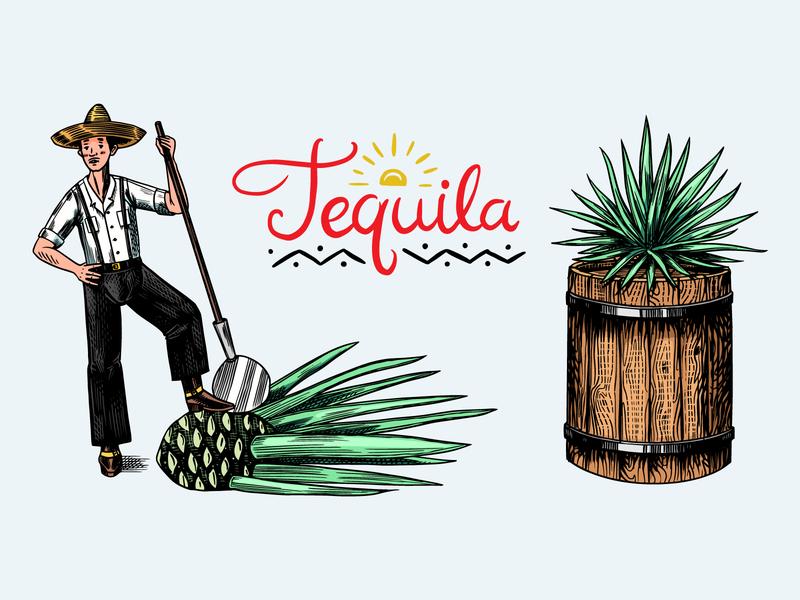 Tequila making engraving engraved badge design illustration vintage hand drawn beverage mexican liquor agava tequila making tequila