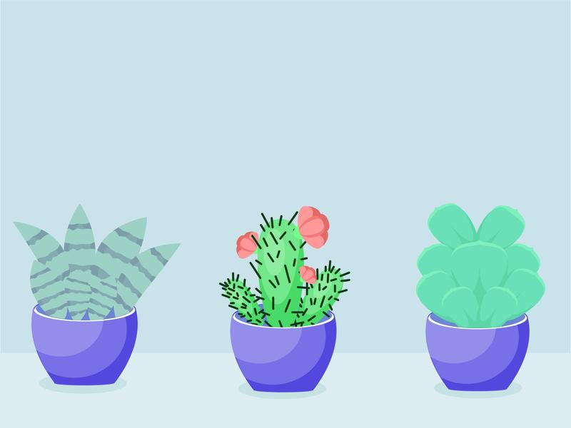 Cute Succulents illustration