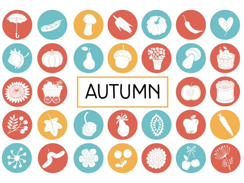 Vegetables and fruit set collection  icon set autumn material design icon flat