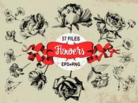 Peony, roses, poppy, daisy flowers