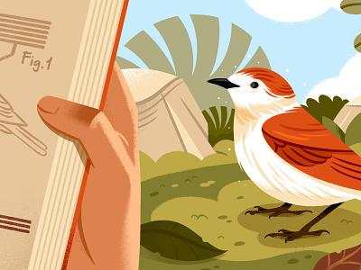 What is Creative Nonfiction? landscape editorial illustration writing bird editorial illustration