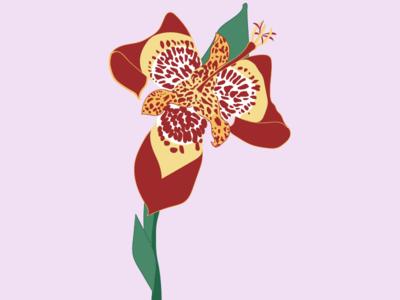Pavonia (tigridia)