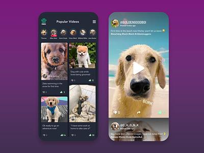 Social Network for Pets app design design animal uxui ui app uiux video pets social network socialmedia social app social dog dogs love