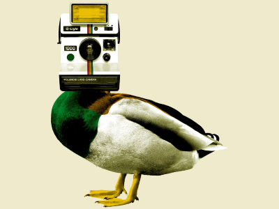 Quack Photography designer design photoshop artist art ducks duck polaroid photography