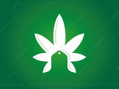 Cannabis Coupon Sale Logo