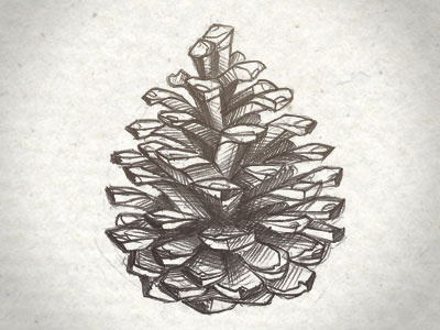 Pomme de pin nature draft paper brown pomme de pin sketch drawing