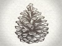 Pomme de pin