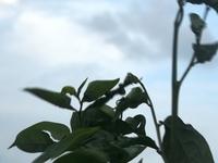 a random plant Dscf6487