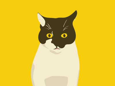 Panda animal pet yellow cartoon illustration cat