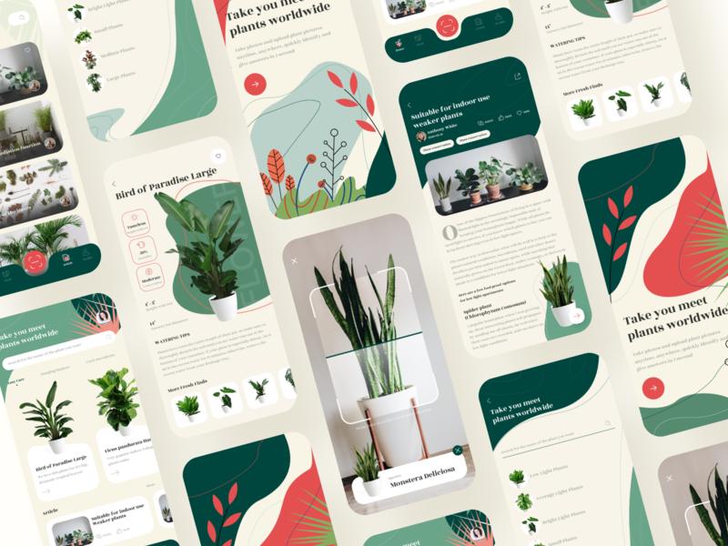 Identify Plants App branding app illustration 设计 ui