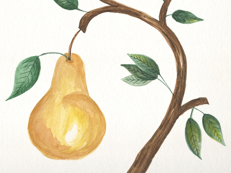 Pear Watercolor hand draw leaves art fall bark leaf tree fruit pear watercolor illustration