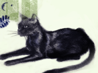 Cat Illustration W.I.P