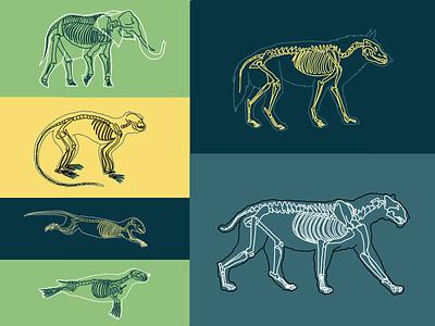 O Livro da Selva - Ilustrações jungle book jungle selva mogli mowgli book book illustration animals illustrated illustrator animals