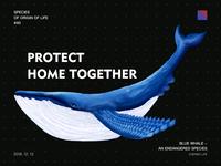 Our friend Blue Whale