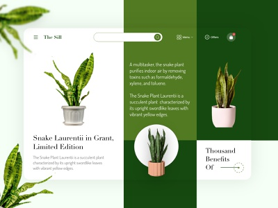Online Home Plant UI plants house plant house plant websites home plant website design website mobile application clean uiux ux ui app interaction ux design design app design ui design