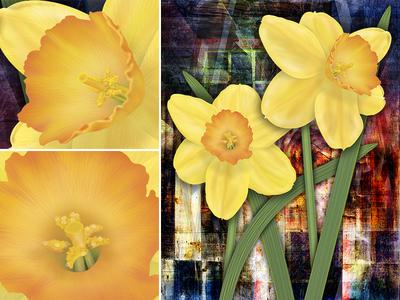 Rustic Daffodils