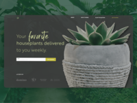 Plant Shop Above the fold – Daily UI 003