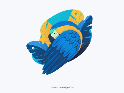 Blue and yellow macaw procreate graphic design illustration flat design