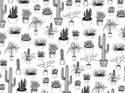 Cacti cacti cactus succulent plant pot illustration drawing black and white ink