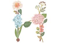 Botanical Letter H