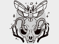 Cat Skull, Moth, Third Eye, Snake Illustration