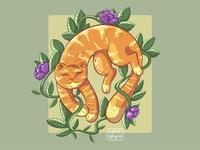 dream kitty