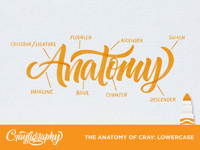The Anatomy Of Cray typography type tutorial hand lettering calligraphy lettering