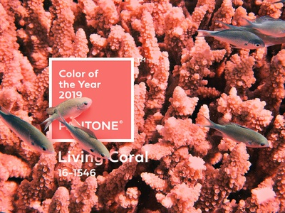 Pantone Color of the year 2019 Celebration water overlap lively pink coral living 2019 color pantone photoshop fish