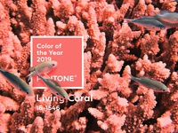Pantone Color of the year 2019 Celebration