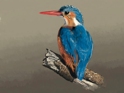 Kingfisher | Martin Pêcheur sketch drawing painting handmade