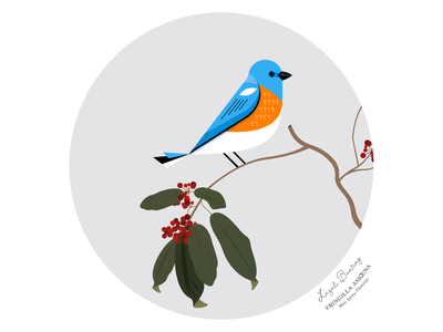 Birds of America: Lazuli Bunting bunting blue lazuli bird audubon illustration vector