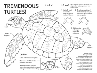 Tremendous Turtles nature activity sheet line art activity childrens wildlife nature coloring illustration animal sciart world turtle day turtles
