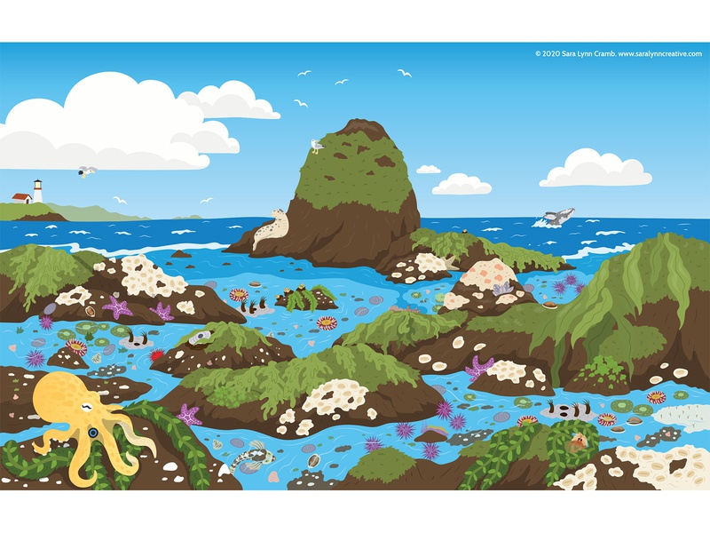 Tidal Pools nonfiction octopus tidal pool ocean childrens publishing kidlitart educational illustration animals illustration vector sciart