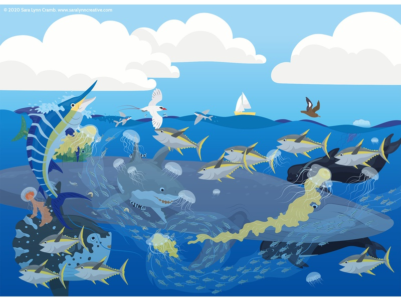Open Ocean wildlife childrens publishing whale fish ocean animals ocean kidlitart nonfiction animals illustration vector sciart