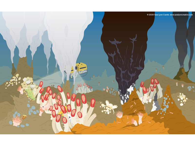 Deep Sea Thermal Vents educational childrens publishing wildlife deep sea creatures deep sea thermal vent nonfiction kidlitart educational illustration illustration vector sciart