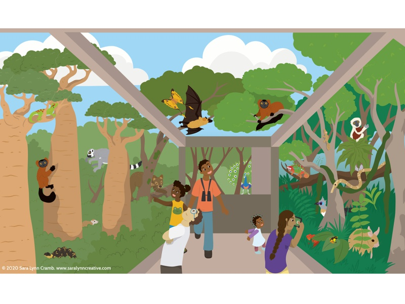 Madagascar Exhibit educational wildlife lemur madagascar zoo exhibit zoo childrens publishing kidlitart animals illustration vector sciart