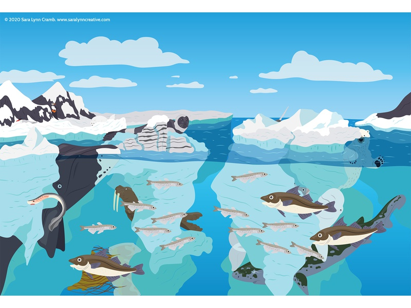 Arctic Ocean natural science wildlife iceberg ocean arctic childrens publishing kidlitart nonfiction animals illustration vector sciart