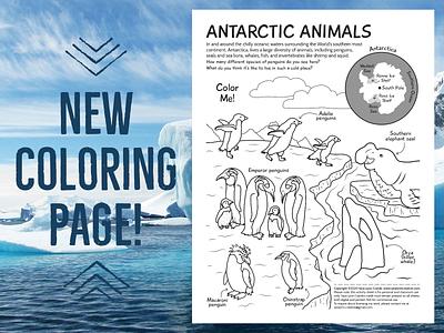 Antarctic Animals Coloring Page snow winter antarctica ocean line art adobe illstrator penguins wildlife kidlitart educational illustration animals nonfiction illustration sciart vector
