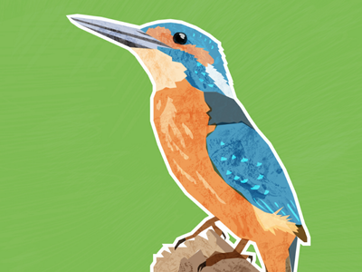 Kingfisher wildlife digital illustration digital art illustration digital collage kingfisher vector adobe illustrator animal artist animal bird art bird