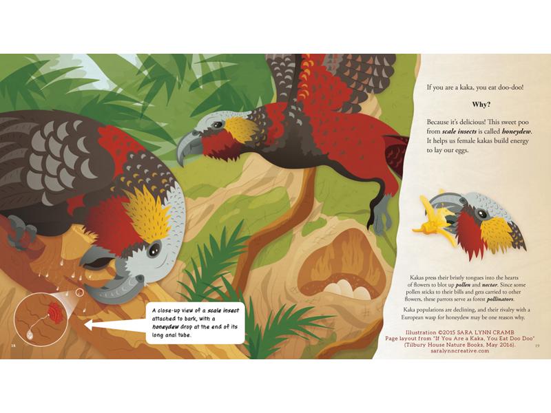 Kaka Bird Eating Honeydew flying forest nest new zealand bird biology animal behavior feces scat poop animals natural science