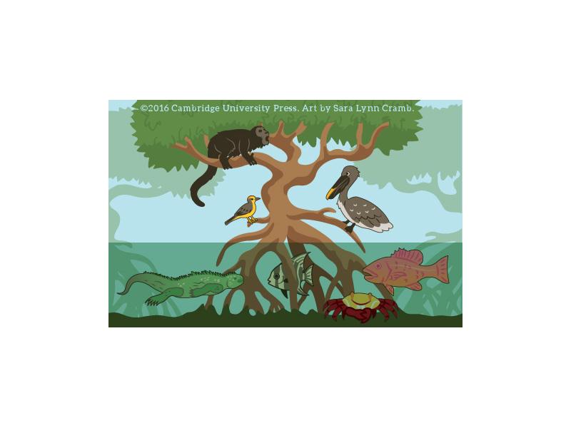 Mangrove wildlife digital illustration vector illustration vector mangrove iguana fish bird animals islands galapagos ecuador
