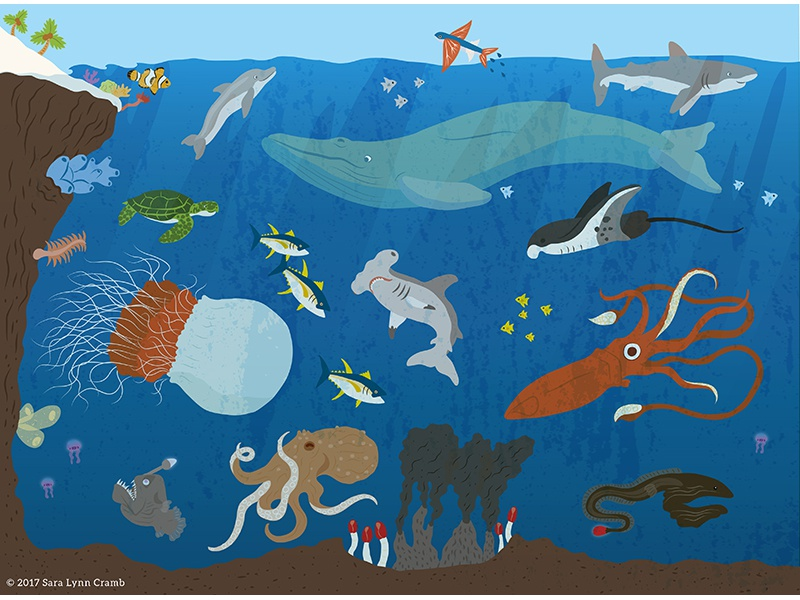 Animals of the World illustrations-Ocean Animals whale coral reef giant squid ocean natural science nonfiction educational illustration sciart ecosystems habitats world animals