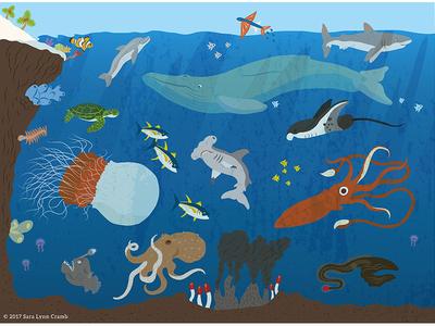 Animals of the World illustrations-Ocean Animals