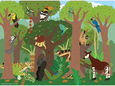 Animals of the World illustrations-Rainforest Animals