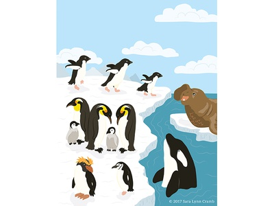 Animals of the World illustrations-Polar Animals Antarctic pengiun whale ocean natural science nonfiction educational illustration sciart ecosystems habitats world animals antarctic