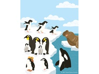 Animals of the World illustrations-Polar Animals Antarctic