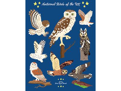 Night Explorer book illustrations-Nocturnal Birds