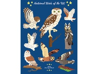 Night Explorer book illustrations-Nocturnal Birds