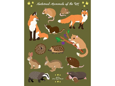 Night Explorer book illustrations-Nocturnal Mammals