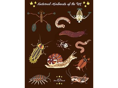 Night Explorer book illustrations-Minibeasts